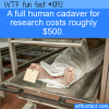 WTF Fun Fact – Dead Body Cost