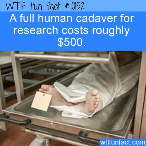 WTF Fun Fact - Cadaver