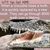 WTF Fun Fact – Crocodile Teeth