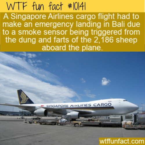WTF Fun Fact - Emergency Landing For Sheep Farts