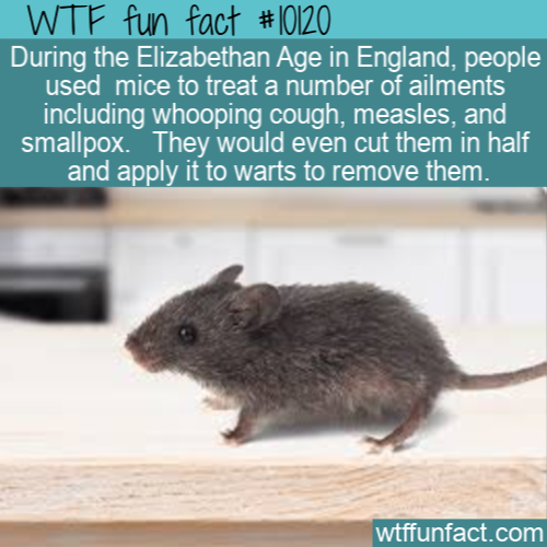 WTF Fun Fact - Engand Mouse Treatments