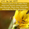 WTF Fun Fact – Pieza Fly Names