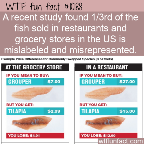 WTF Fun Fact - The Wrong Fish