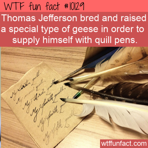 WTF Fun Fact - Thomas Jefferson Geese