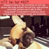 WTF Fun Fact – Dog-Speak