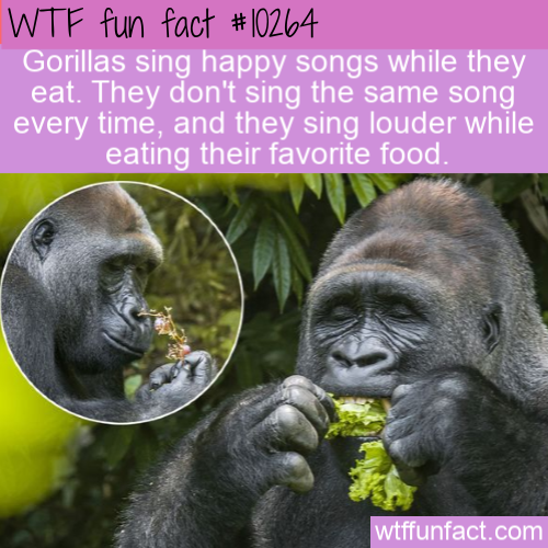 WTF Fun Fact - Happy Eating Songs