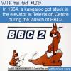 WTF Fun Fact – Kangaroo Launch