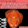 WTF Fun Fact – Komodo Dragon Bony Armor