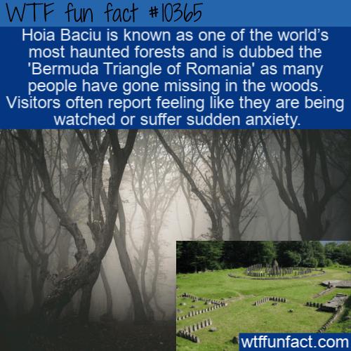 WTF Fun Fact - Bermuda Triangle Of Romania