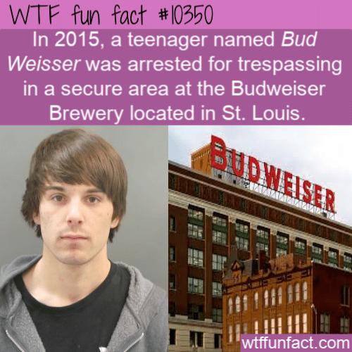 WTF Fun Fact - Bud Weisser Trespassing