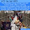 WTF Fun Fact – Calming Companions