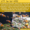 WTF Fun Fact – Weird Clownfish Life