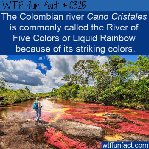WTF Fun Fact - Colorful River