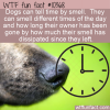 WTF Fun Fact – Dogs Smell Time