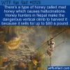 WTF Fun Fact – Hallucinogenic Honey