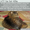 WTF Fun Fact – Hero Cat Grace