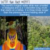 WTF Fun Fact – World's Longest Water Slide