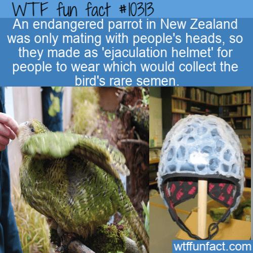 WTF Fun Fact - Ejaculation Helmet
