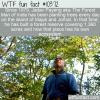 WTF Fun Fact – The Forest Man Of India