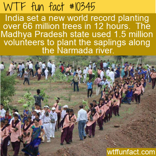 WTF Fun Fact - Trees Planted
