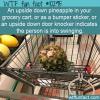 WTF Fun Fact – Upside Down Pineapple