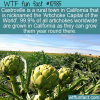 WTF Fun Fact – Artichoke Capital