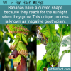WTF Fun Fact – Banana Curves