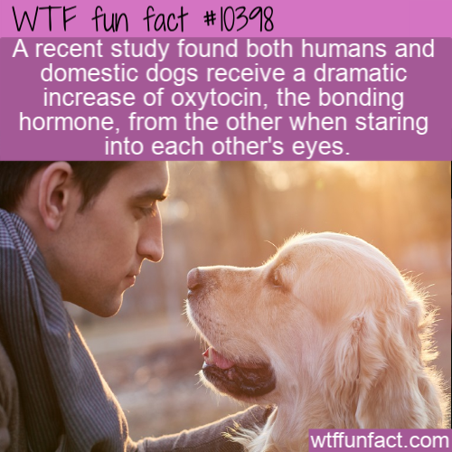 WTF Fun Fact - Dogs Oxytocin