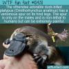 WTF Fun Fact – Venomous Platypus