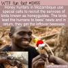 WTF Fun Fact – Honeyguides