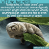 WTF Fun Fact – Tardigrades