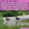 WTF Fun Fact – Poronkusema