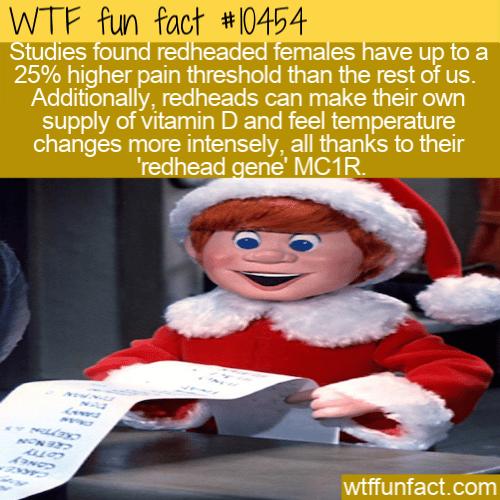 WTF Fun Fact - Red Head MC1R Gene Differences