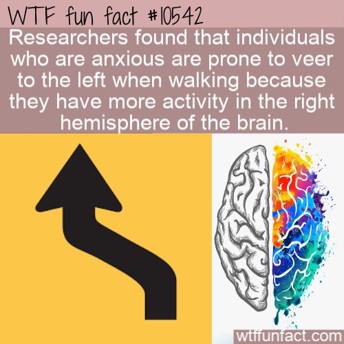 WTF Fun Fact - Anxious People Veer Left