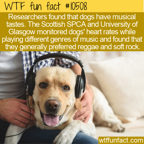 WTF Fun Fact - Dogs Like Soft Rock Music