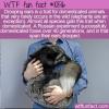 WTF Fun Fact – Drooping Ears Trait