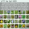 WTF Fun Fact – So Many Edible Plants