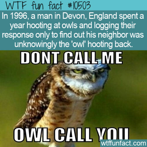 WTF Fun Fact - Hooting At Eachother