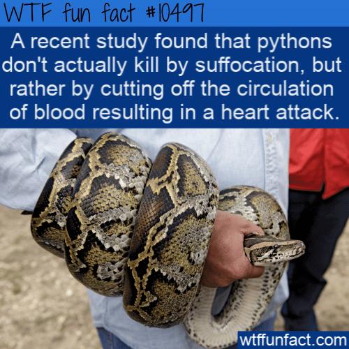 WTF Fun Fact - Pythons methods
