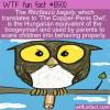 WTF Fun Fact – Rézfaszú Bagoly
