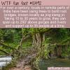 WTF Fun Fact – Root Bridge