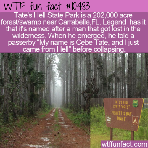 WTF Fun Fact - Tate's Hell State Park