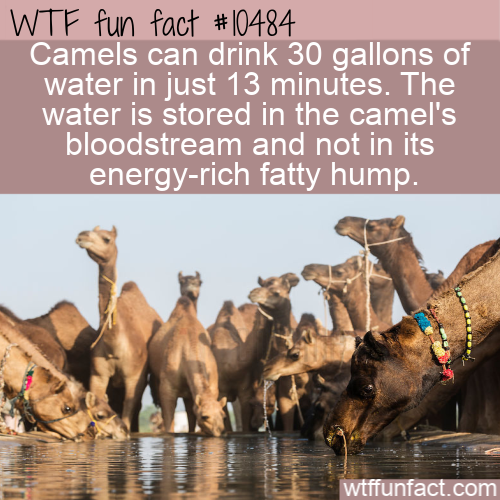 WTF Fun Fact - Store Water In Bloodstream