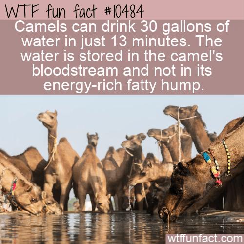 WTF Fun Fact - Store Water In Bloodstream