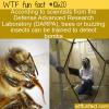 WTF Fun Fact – Bzzzzomb Detector