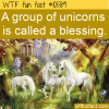 WTF Fun Fact – A Blessing Of Unicorns