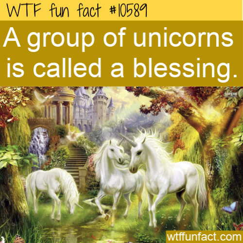WTF Fun Fact - Blessing of Unicorns
