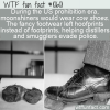 WTF Fun Fact – Cow Shoes