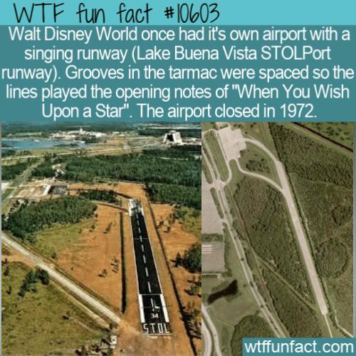 WTF Fun Fact - Disney World Airport