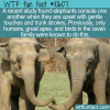 WTF Fun Fact – Elephants Console One Another